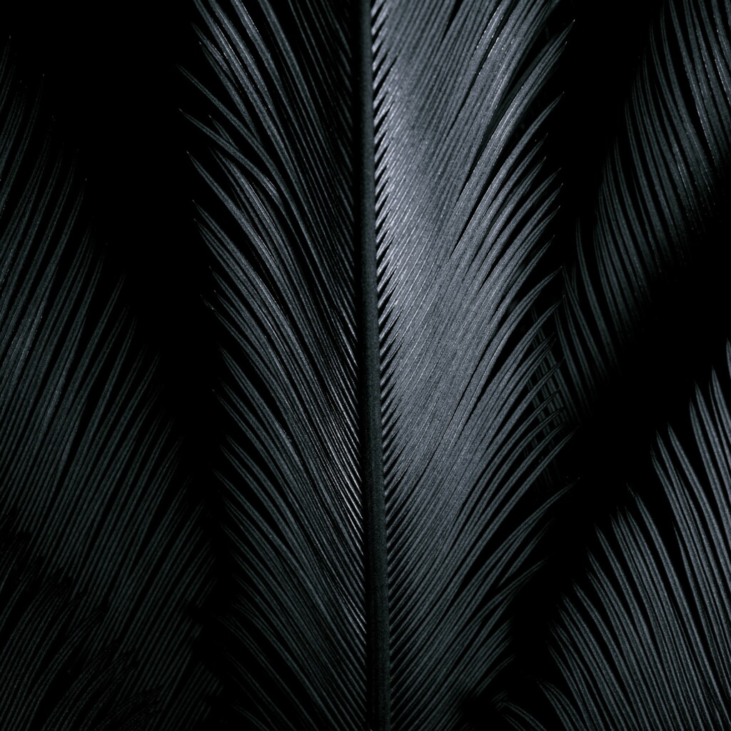 an image of black feathers.